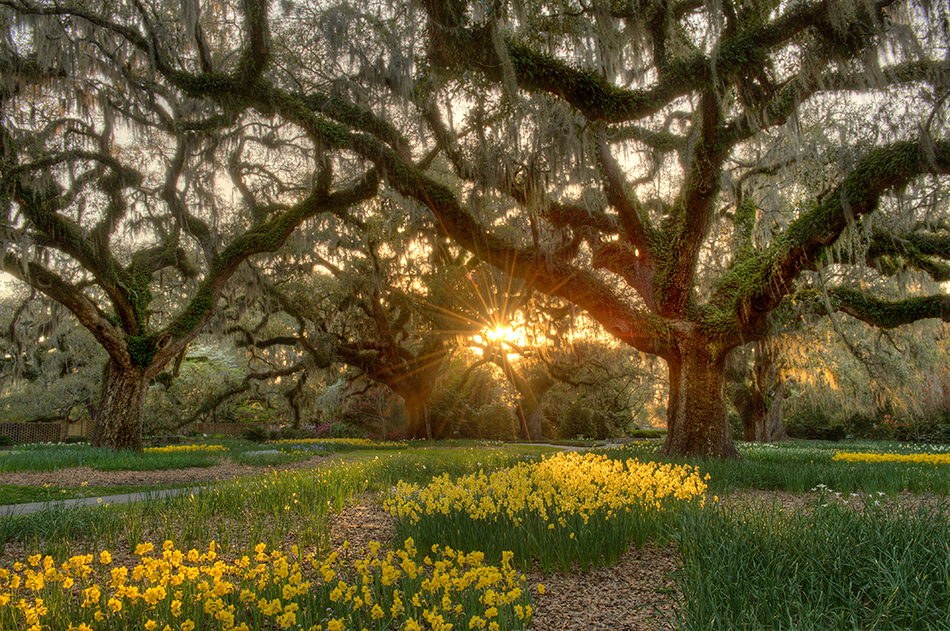 Brookgreen Gardens Lowcountry Zoo a Haven for Grand Strand's Native Species