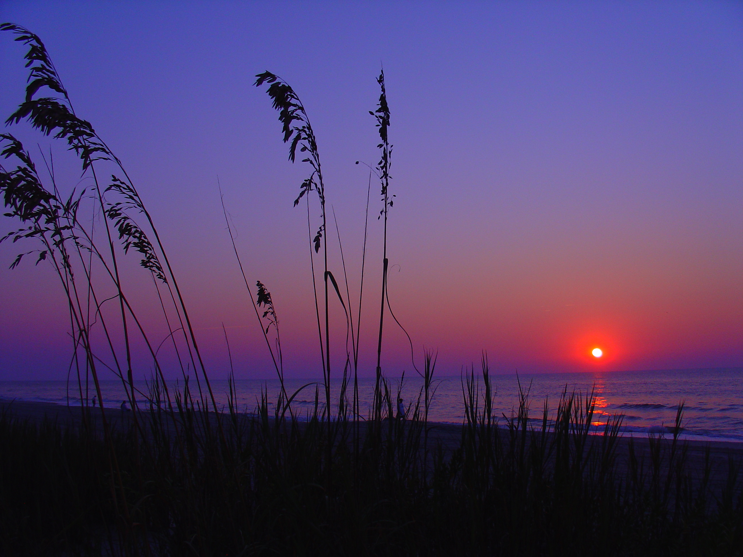Ways to Spend the Perfect Honeymoon in Myrtle Beach